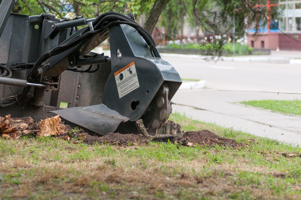 stump grinding Citrus heights