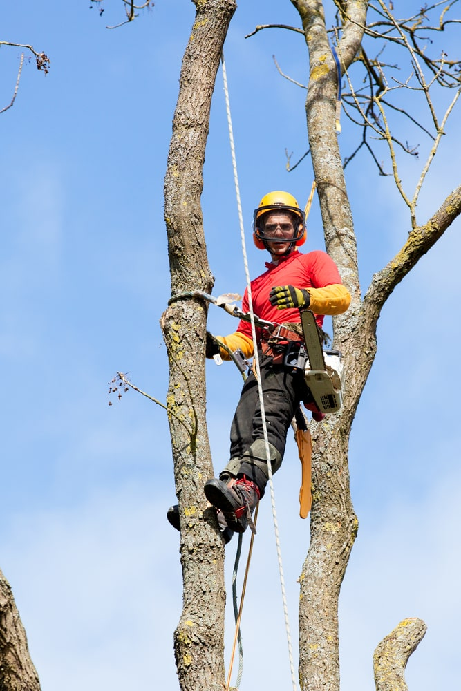 Tree Surgeon Citrus heights